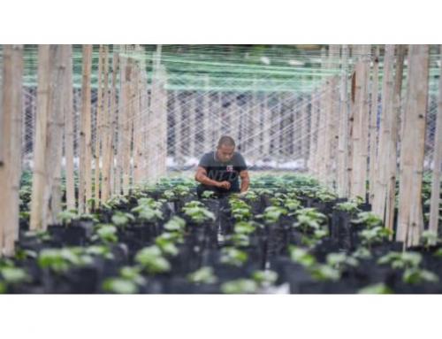 UiTM graduate turns millionaire farmer in Perak