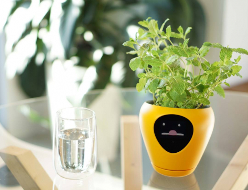 I'm Thirsty! This Smart Flowerpot Lets Plants Show Their Feelings