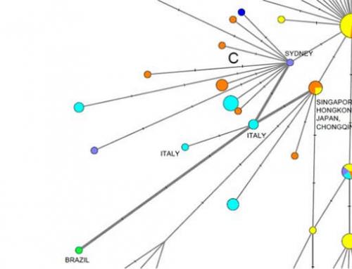 COVID-19: genetic network analysis provides 'snapshot' of pandemic origins